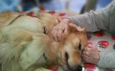 Formation d'Intervenant en Médiation Animale 2019 : les inscriptions sont ouvertes !