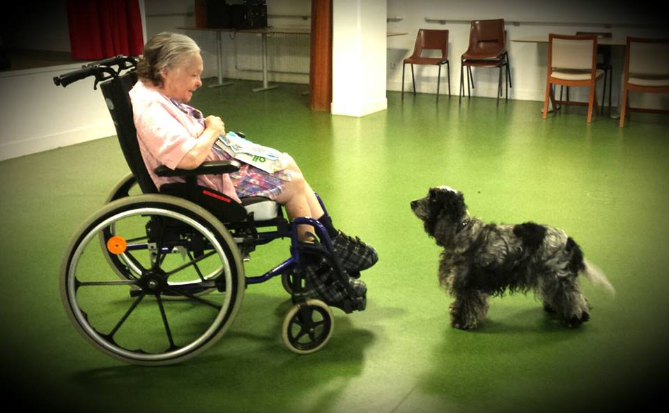 Apprendre son chien à travailler en Médiation Animale