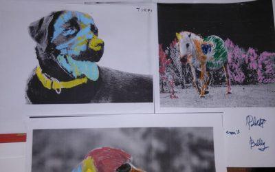 Beau mélange : Zoothérapie & Art-thérapie