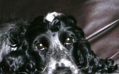 Histoire d'un chien-médiateur. Brys